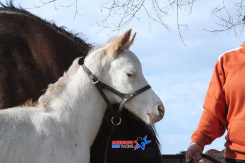 Meet the Rare White Foal at Rockridge Stud | America's Best Racing