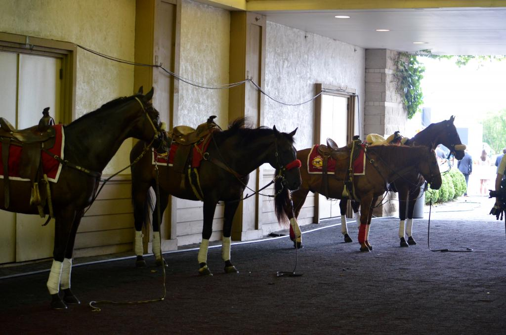 While the crowd seemed to be really into both things, the ponies in the tunnel were more interested in napping before the busy stakes action. (Melissa Bauer-Herzog/America's Best Racing)