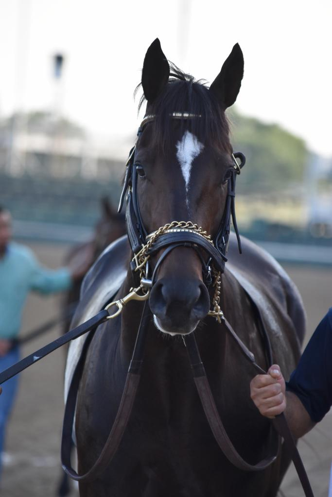 The first stakes race of the night, the Matt Winn, was an exciting one for me because it featured my Kentucky Derby pick. McCraken didn't run up to my hopes in the Derby but I was hopeful he could rebound here. (Melissa Bauer-Herzog/America's Best Racing)