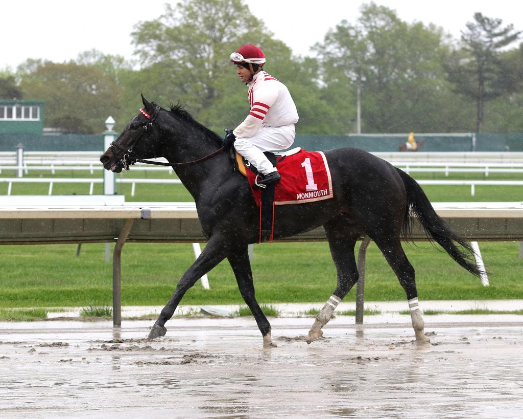 Long Branch Stakes winner Joevia. (Taylor Ejdys/EQUI-PHOTO)