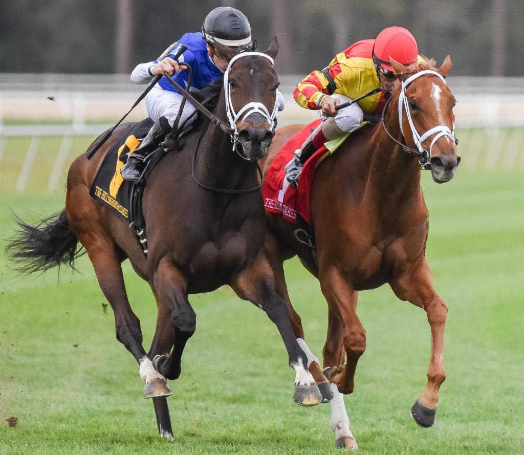 Tepin won the 2016 Hillsborough Stakes Stakes at Tampa Bay Downs in March. (Eclipse Sportswire)