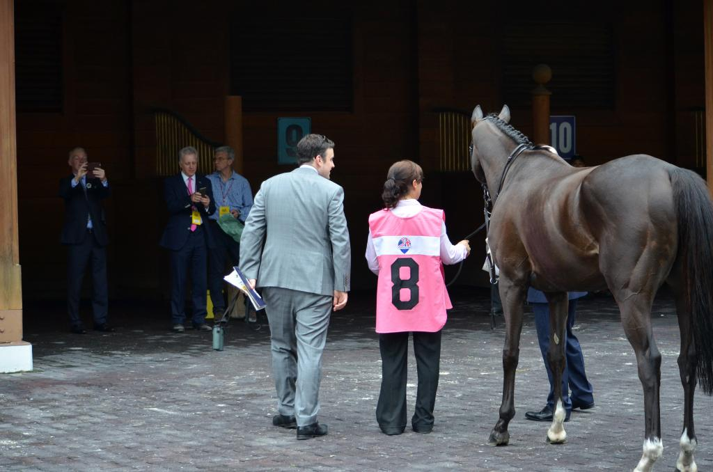 Clondaw Warrior's connections spent a few minutes getting a picture of the 9-year-old gelding and a few members of his team. (Melissa Bauer-Herzog/America's Best Racing)