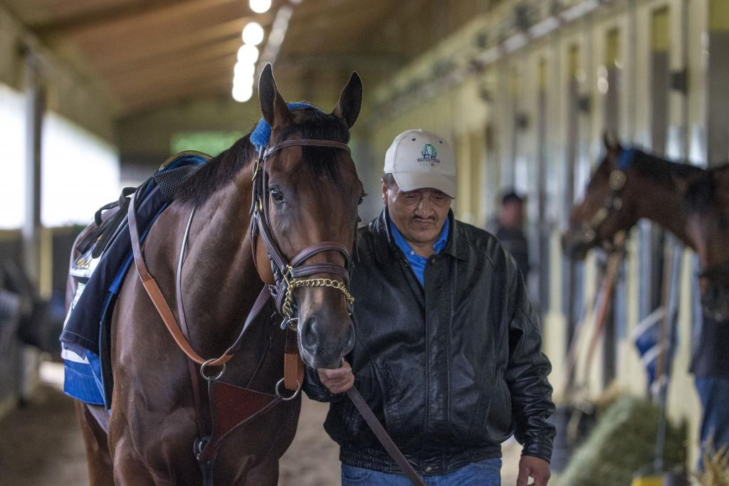 American Pharoah at Belmont Park preparing for the 2015 Belmont Stakes. (Eclipse Sportswire)