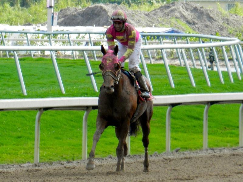 Groupie Spectacularly Wins Career Finale America S