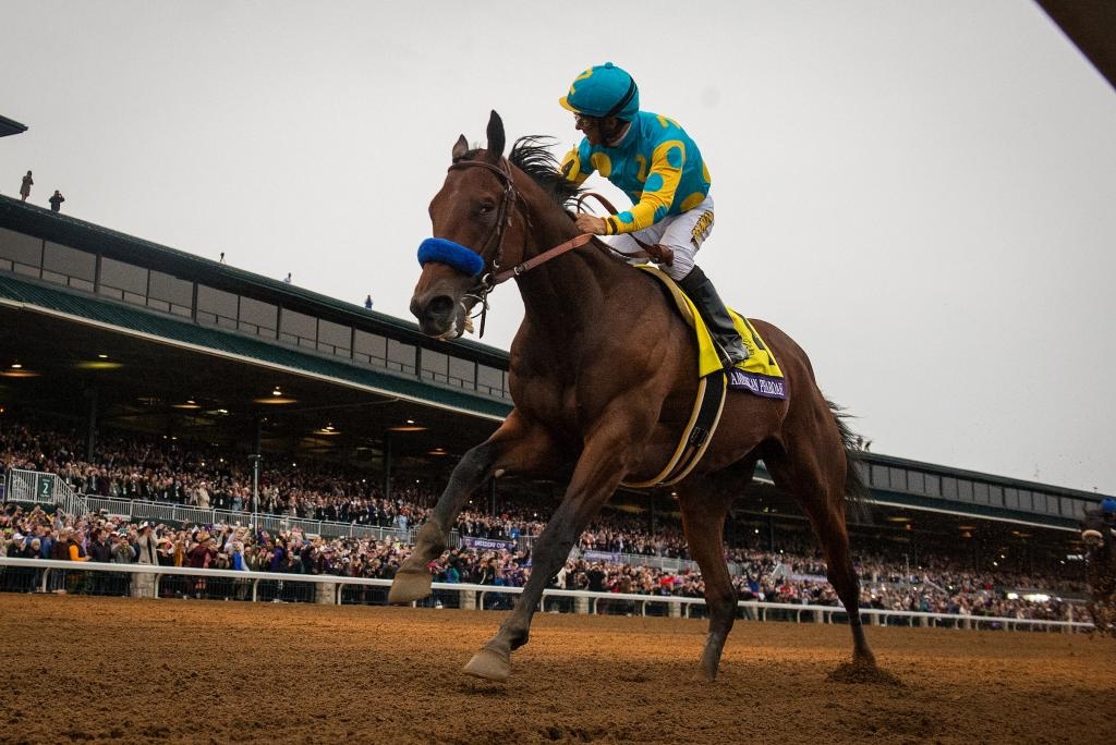 American Pharoah led from start to finish under Victor Espinoza in a 6 1/2-length romp in the Breeders' Cup Classic.