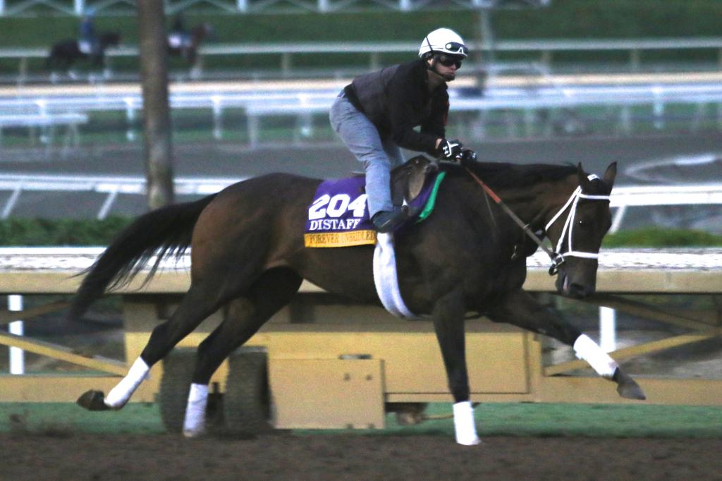 The first Longines Distaff contender I saw today was Forever Unbridled. She's a dark horse in the running (literally, in this case!), but she looked incredibly strong as she trained this morning. (Penelope P. Miller/America's Best Racing)