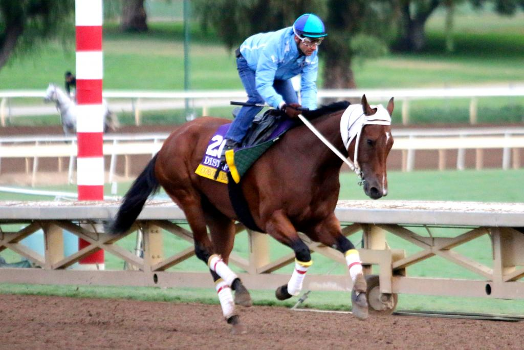 Another X-factor in the Distaff is Argentinian runner Corona Del Inca. She's very noticeable on the track every morning because she wears what appears to be a head warmer! I need to get to the bottom of that. (Penelope P. Miller/America's Best Racing)