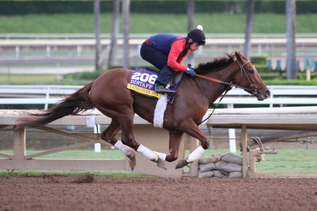 Land Over Sea is a filly who is facing a big challenge in the Distaff; she's an underdog in this very tough race, but she was soaring as she got her exercise this morning at Santa Anita. (Penelope P. Miller/America's Best Racing)