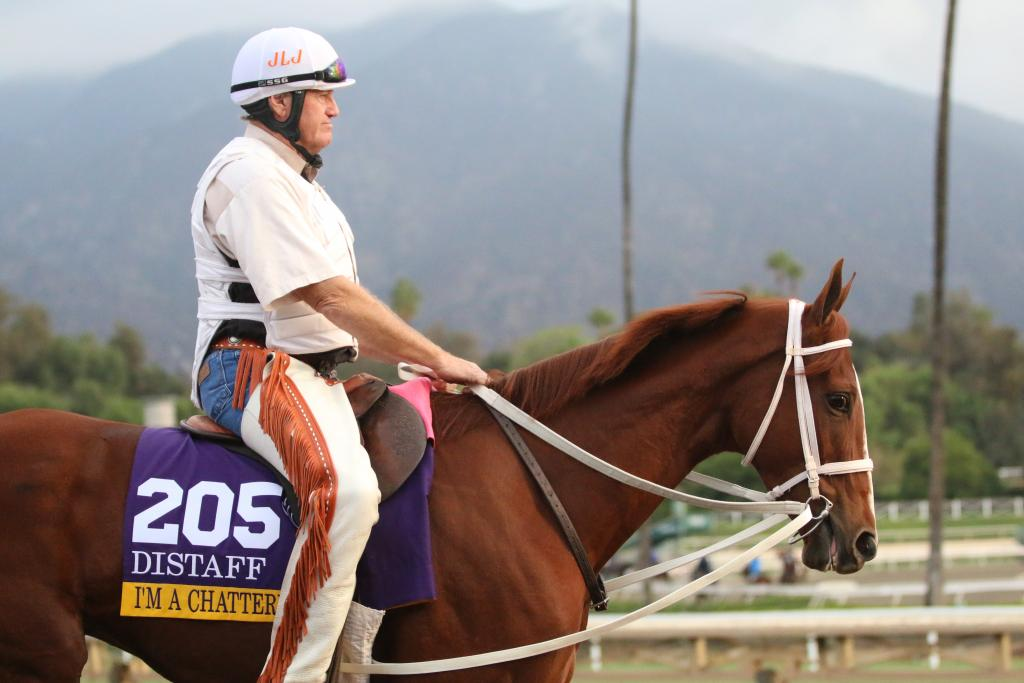 I adore I'm A Chatterbox. She's trained by Larry Jones, an old-school horseman who rides his Thoroughbreds in the morning so that he knows exactly how they feel when they train. (Penelope P. Miller/America's Best Racing)