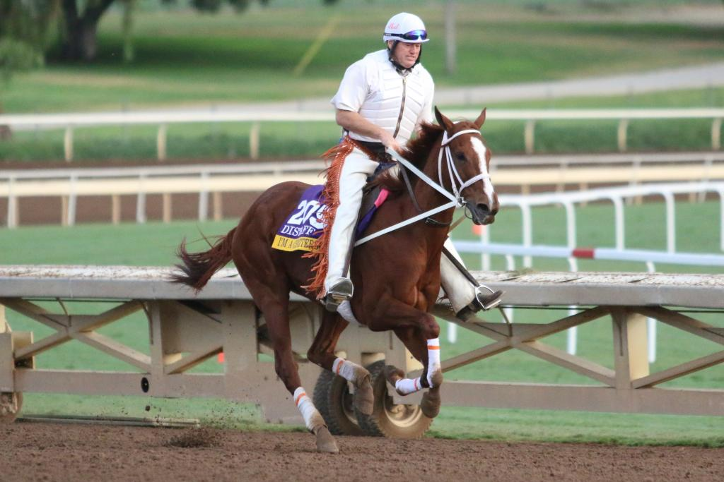 I'm A Chatterbox looked like she was raring to go out there; she was pulling at Larry as she galloped around Santa Anita and looked like she wanted to move into a higher gear. (Penelope P. Miller/America's Best Racing)