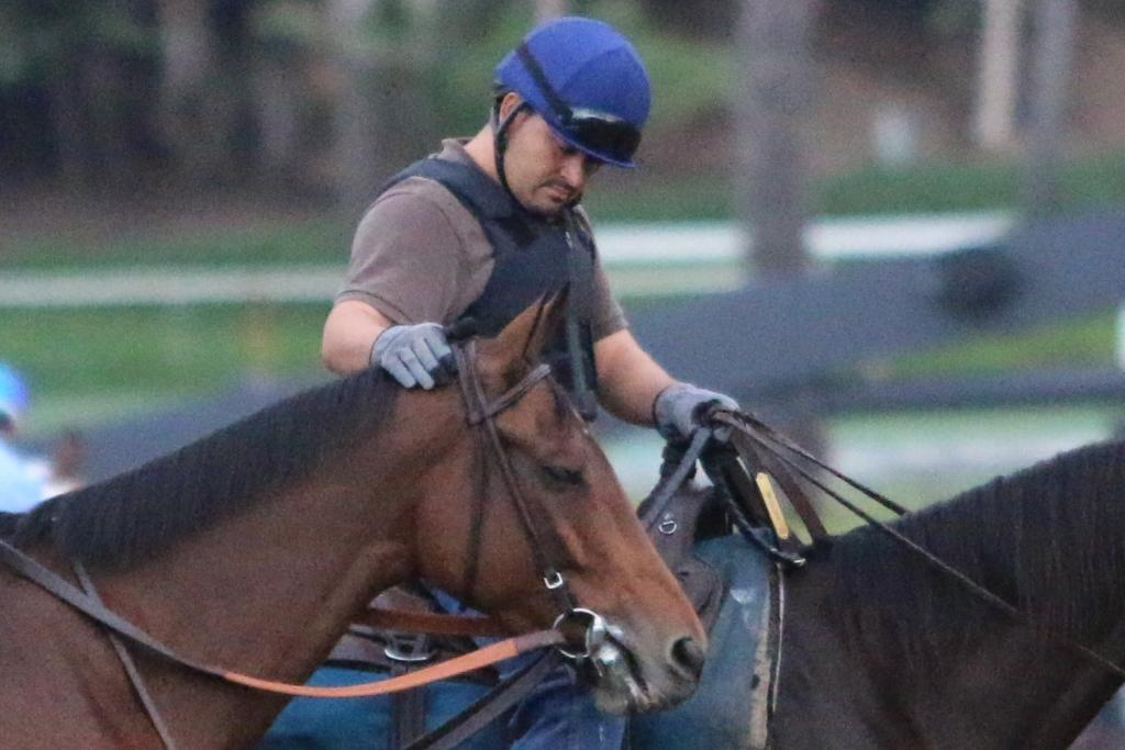 Beholder is clearly beloved by her team, too; the Breeders' Cup Distaff will be her last race before Beholder retires, and her caretakers are clearly relishing every moment they spend with the marvelous mare. (Penelope P. Miller/America's Best Racing)