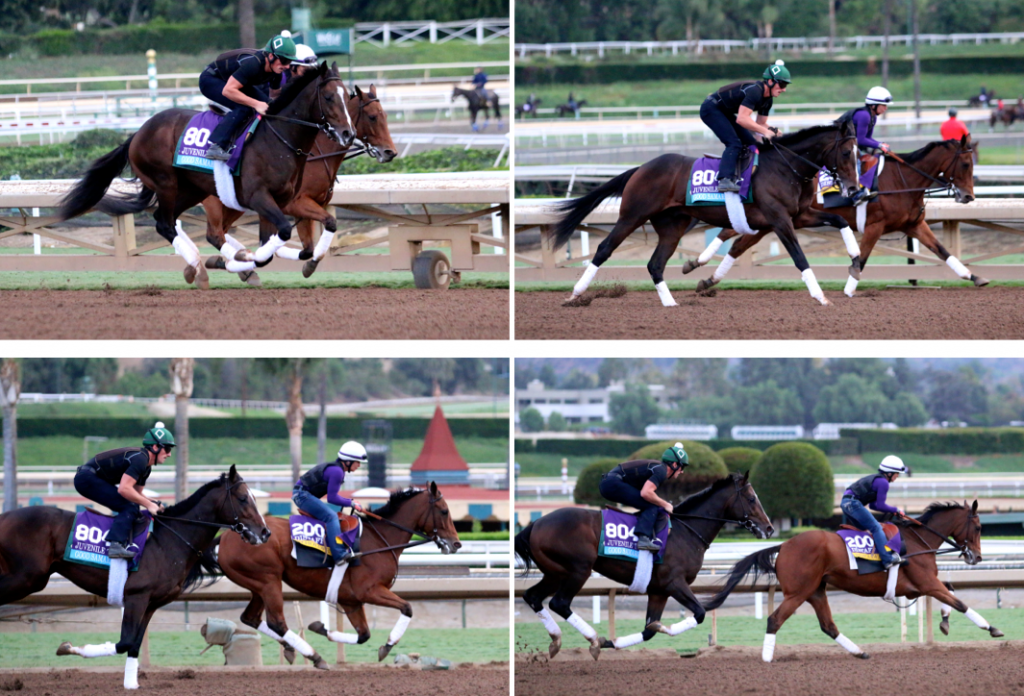 But when Beholder galloped, she was all business. Coming around the turn, she was even with Juvenile runner Good Samaritan; within two strides, she had passed him as Janeen worked to keep her from going even faster. (Penelope P. Miller/America's Best Racing)