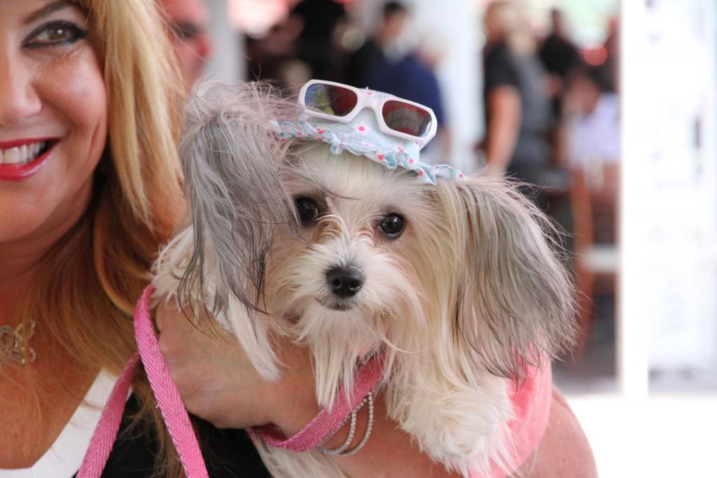 Bingo. Hat, sunglasses, attitude: this pup is our new fashion overlord. (Penelope P. Miller/America's Best Racing)