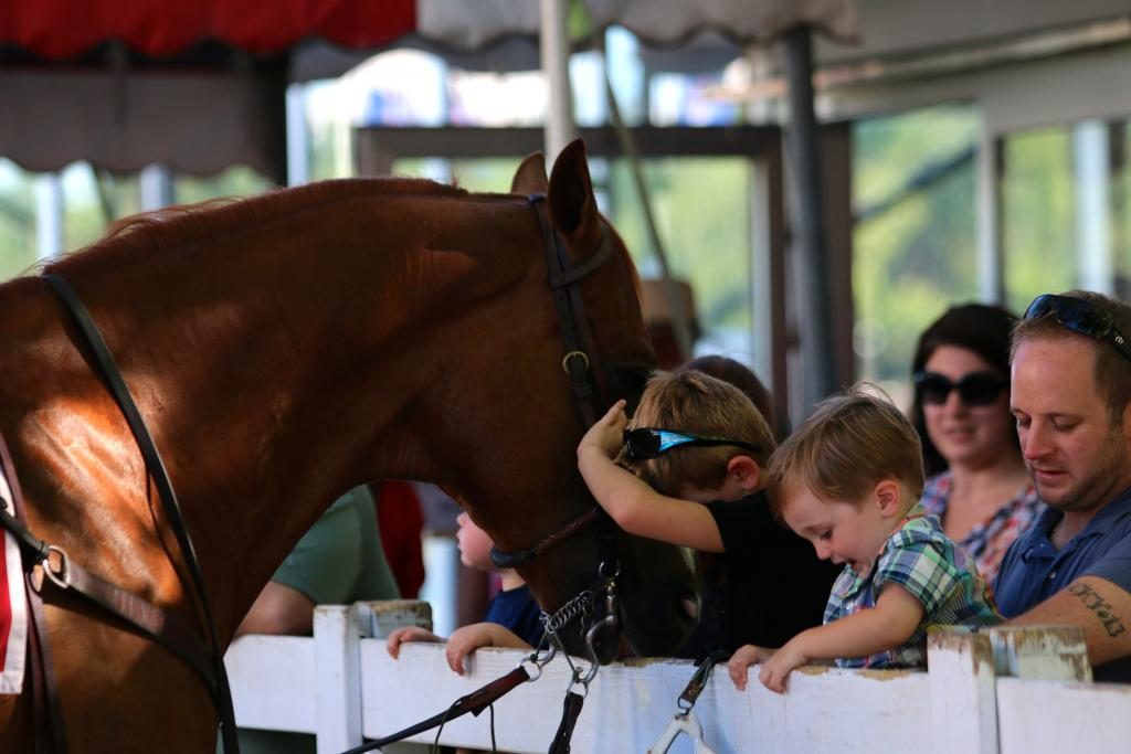 While the younger members of the Saratoga crowd were making friend with the pony horses, those steeds charged with escorting the racehorses from the saddling paddock to the starting gate. (Penelope P. Miller/America's Best Racing)