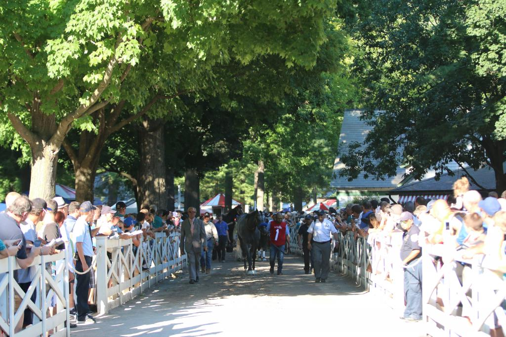 Finally, the Whitney runners began to arrive, marching down the shaded path that meanders through the Saratoga crowds from the barn area to the saddling paddock. (Penelope P. Miller/America's Best Racing)