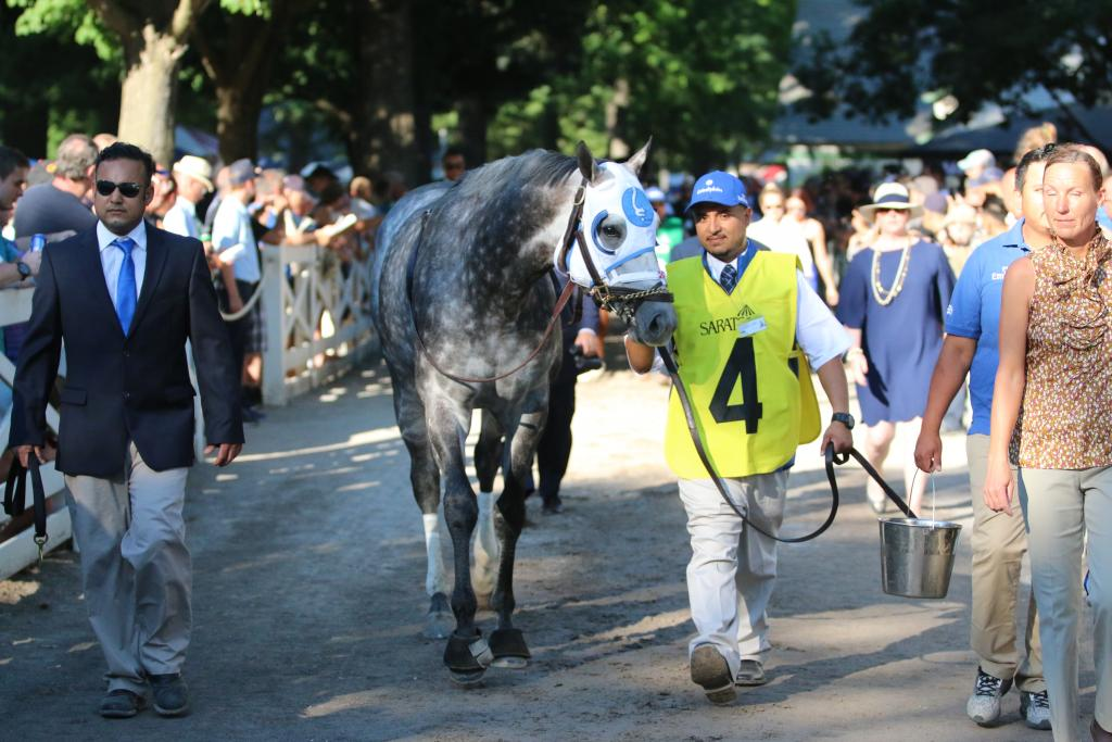 All eyes were on Frosted, that great gray horse who ran second to American Pharoah in the 2015 Belmont Stakes and who absolutely dominated in this year's Metropolitan Mile. (Penelope P. Miller/America's Best Racing)