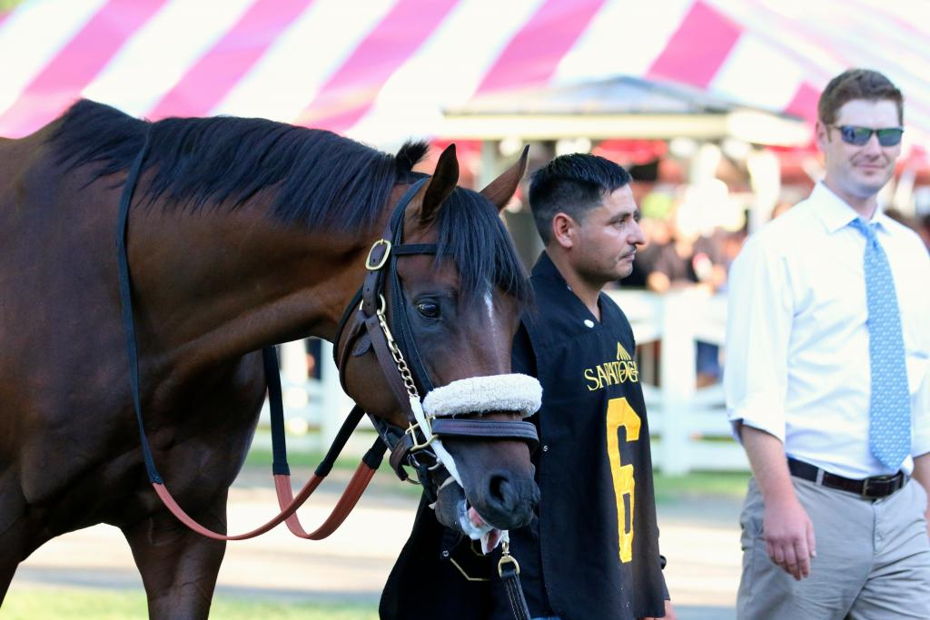 Effinex is a New York powerhouse, and I've always had a soft spot in my heart for this horse (if only because I love how thick his forelock – that tuft of hair between horses' ears – is.)  (Penelope P. Miller/America's Best Racing)