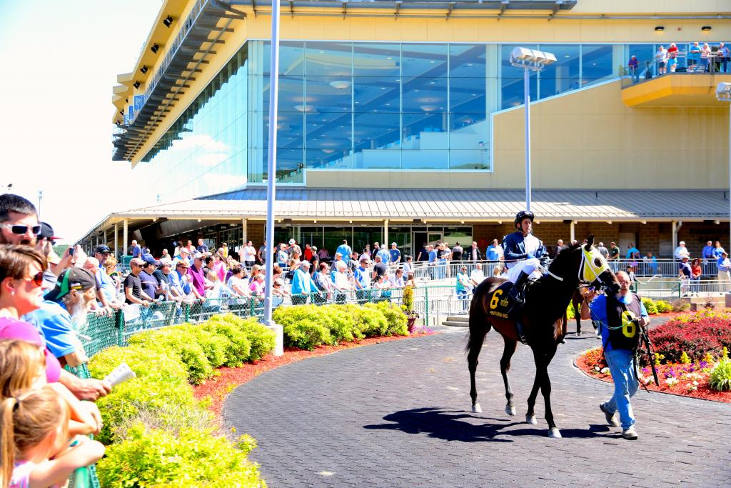 Seriously, the paddock quickly became my favorite spot at the track. Penn National's saddling area is just beautiful, and fans flocked there to admire the horses before each race. (Penelope P. Miller/America's Best Racing)