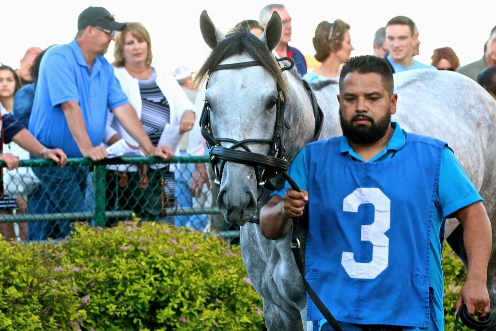 I was smitten with Time To Travel; after studying the program, I thought he was sitting on a big race… plus, I'm a total sucker for a gray. They're just so pretty! (Penelope P. Miller/America's Best Racing)