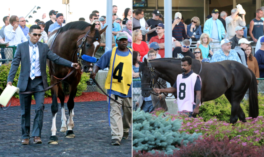 #4 Big Score and #8 Frostmourne were the two favorites for the Penn Mile, and both horses looked magnificent as they paraded for fans in the paddock. (Penelope P. Miller/America's Best Racing)