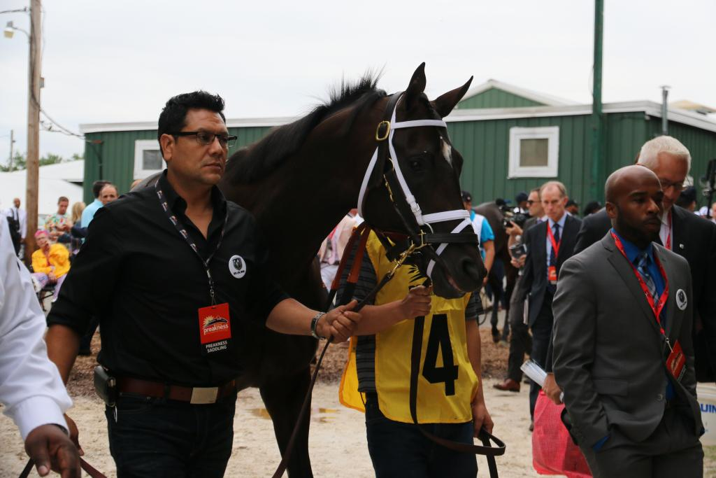 Very soon, Always Dreaming emerged, heading toward the track with designs on extending his Triple Crown bid. (Penelope P. Miller/America's Best Racing)