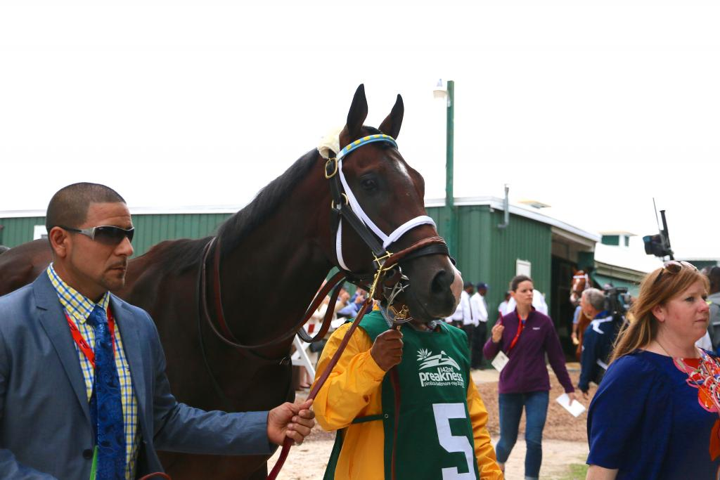 I followed Classic Empire as the handsome colt made his way to the track. (Penelope P. Miller/America's Best Racing)