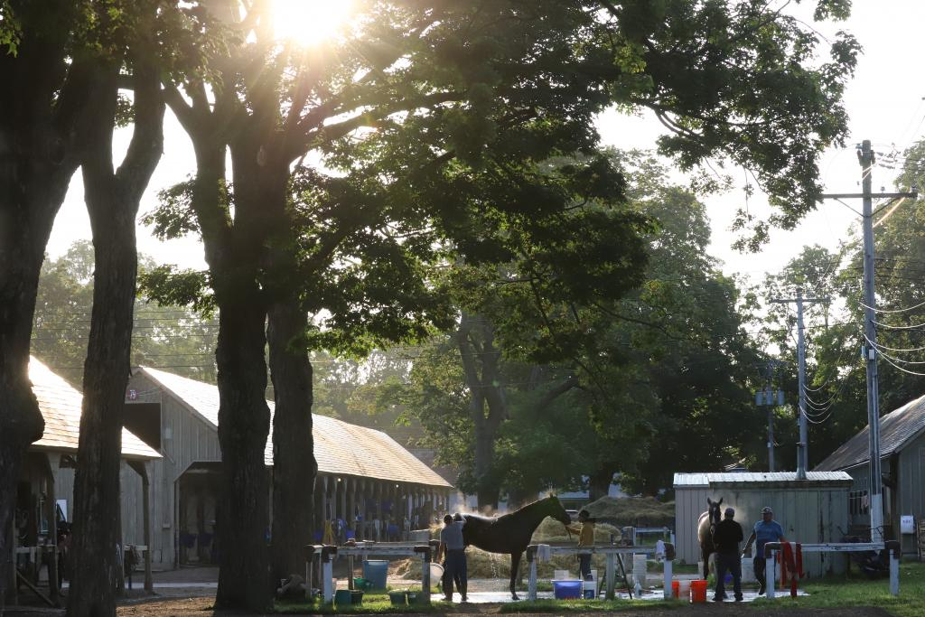 A scene of the barn area at Saratoga. (Penelope P. Miller/America's Best Racing)