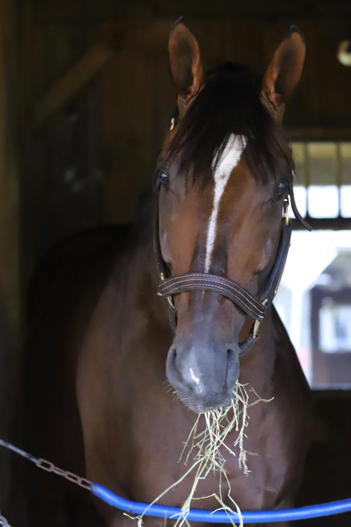 Preservationist grabs a snack in his home at Jimmy Jerkens' barn. (Penelope P. Miller/America's Best Racing)