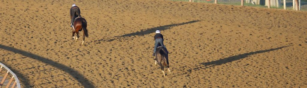 Horses chase their shadows during training hours. (Penelope P. Miller/America's Best Racing)