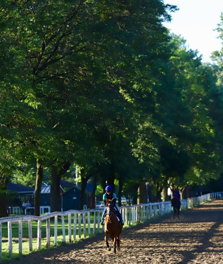 Galloping at Clare Court on the Saratoga backstretch. (Penelope P. Miller/America's Best Racing)