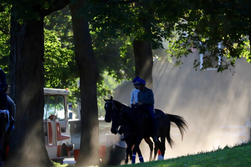 Horses head home from their daily exercise. (Penelope P. Miller/America's Best Racing)
