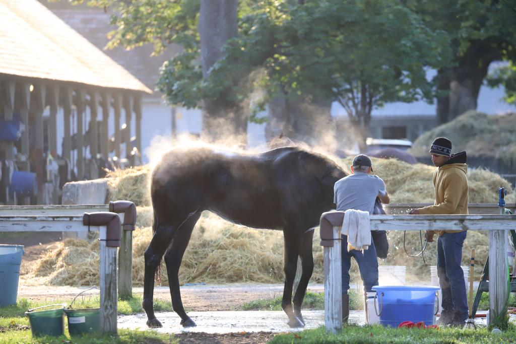Steam rises off of a horse bathing after morning training. (Penelope P. Miller/America's Best Racing)