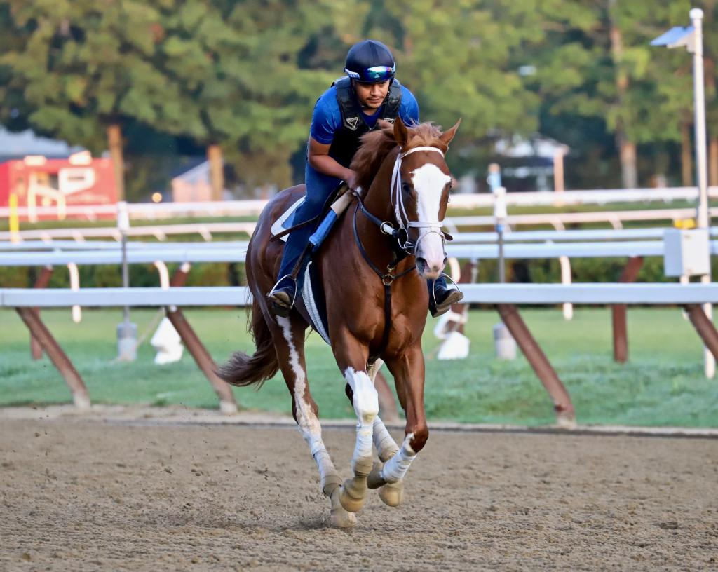 The stunning Adaaj takes a lap at Saratoga. (Penelope P. Miller/America's Best Racing)