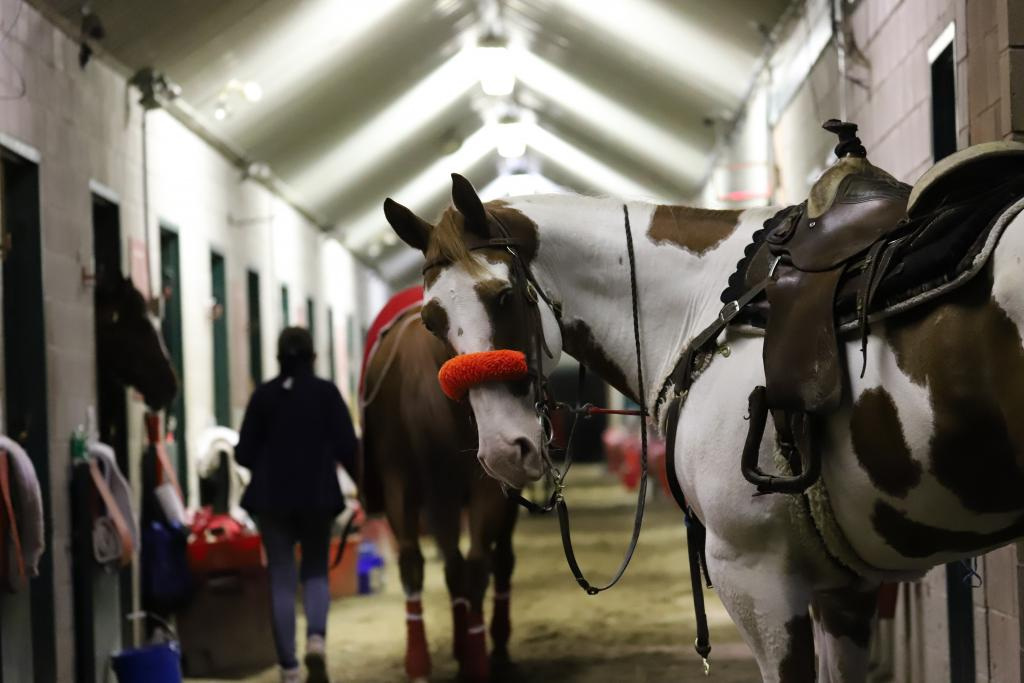 Trainer Mark Casse's pony waits for Got Stormy to train … and for mints from any passing photographers. (Penelope P. Miller/America's Best Racing)