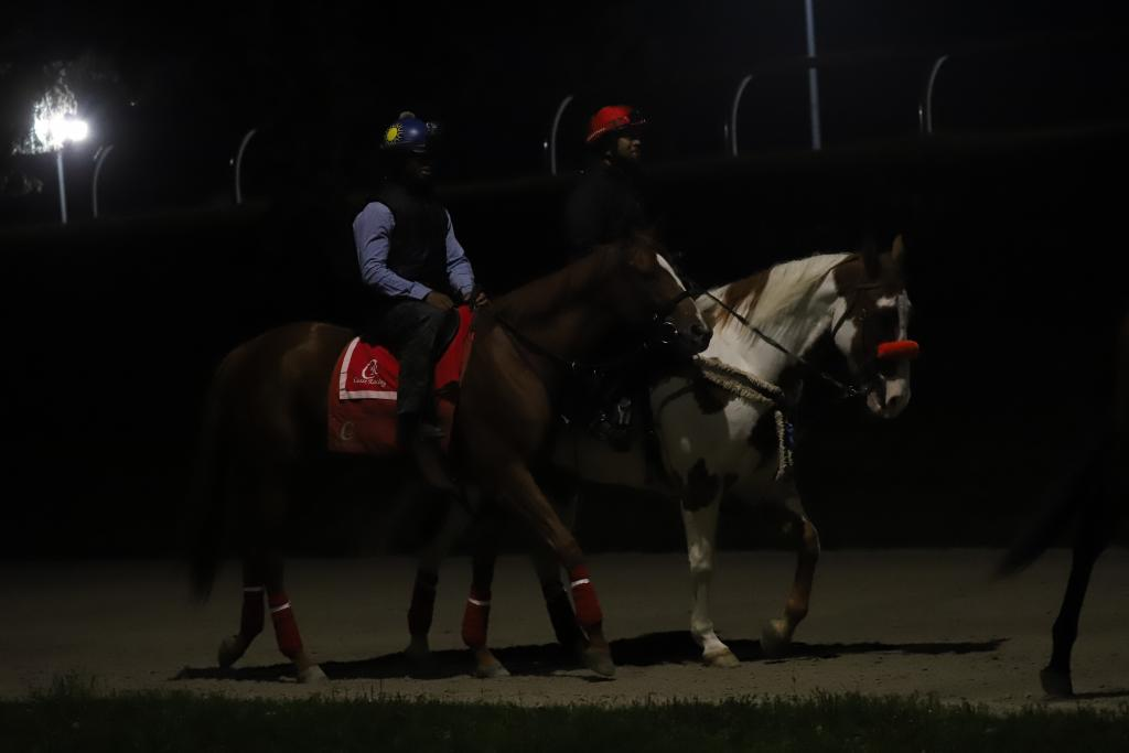 Ricoh Woodbine Mile favorite Got Stormy heads to the racetrack for a pre-dawn gallop ahead of Saturday's race. (Penelope P. Miller/America's Best Racing)