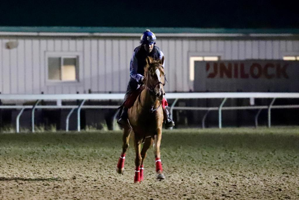 Got Stormy gallops at Woodbine on Friday morning. (Penelope P. Miller/America's Best Racing)