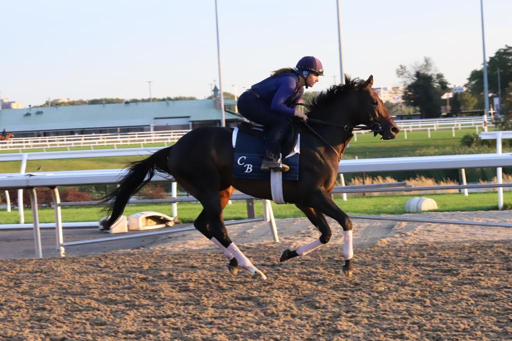 Woodbine Mile contender Made You Look enjoyed an easy gallop through the early light of Friday morning. (Penelope P. Miller/America's Best Racing)