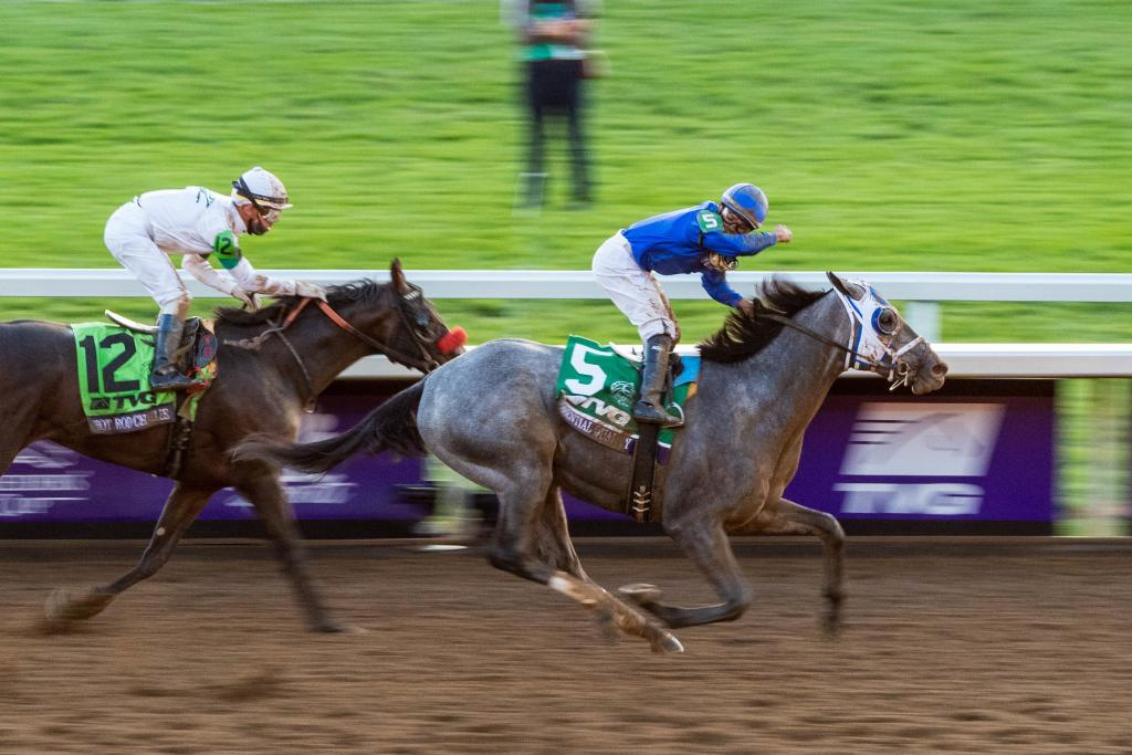 Essential Quality lived up to his name in winning the TVG Breeders' Cup Juvenile presented by Thoroughbred Aftercare Alliance. (Eclipse Sportswire)