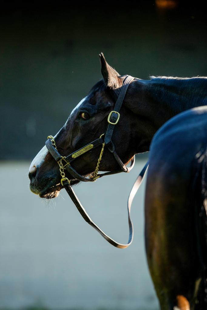 A side view of Lava Man. (Eclipse Sportswire/Alex Evers)