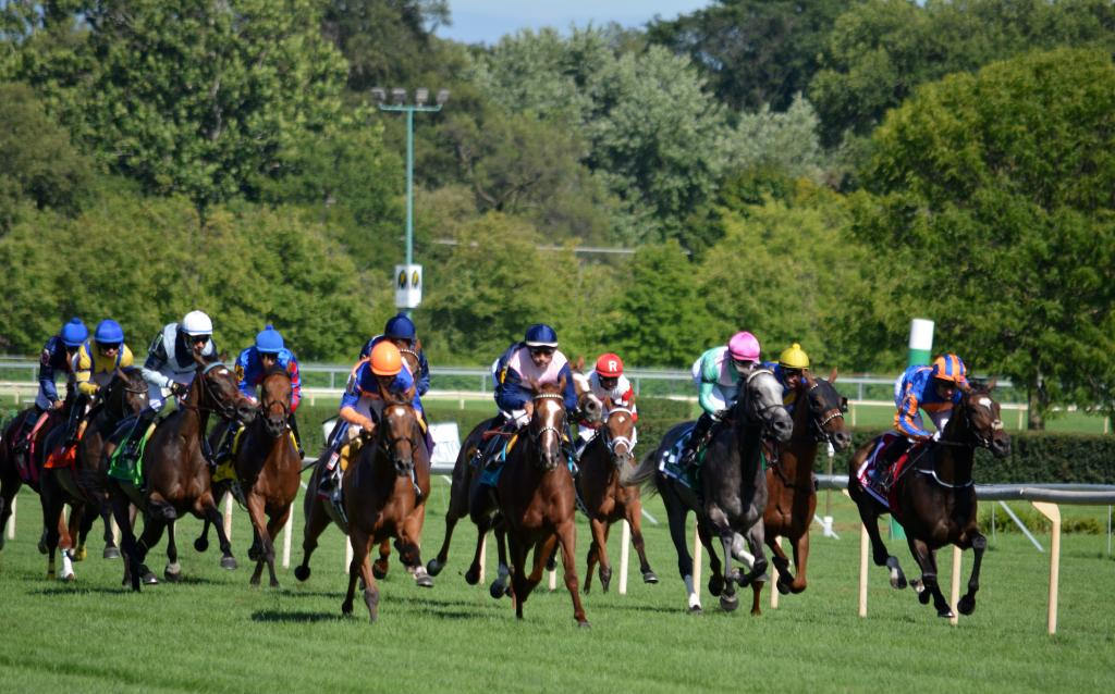 The 14-horse field looked like a big cavalry charge the first time by as everyone jockeyed for position before they got to the first turn. (Melissa Bauer-Herzog/America's Best Racing)