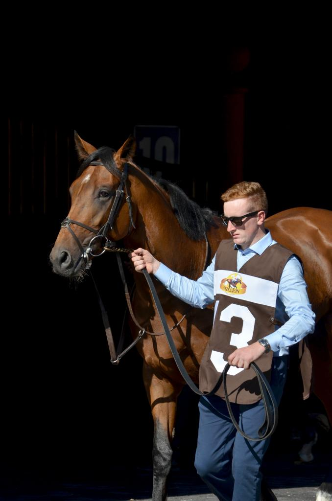 Aidan O'Brien was trying to make history with Deauville in the Arlington Million, who was looking to become the first 3-year-old to win the Million in more than 30 years. (Melissa Bauer-Herzog/America's Best Racing)