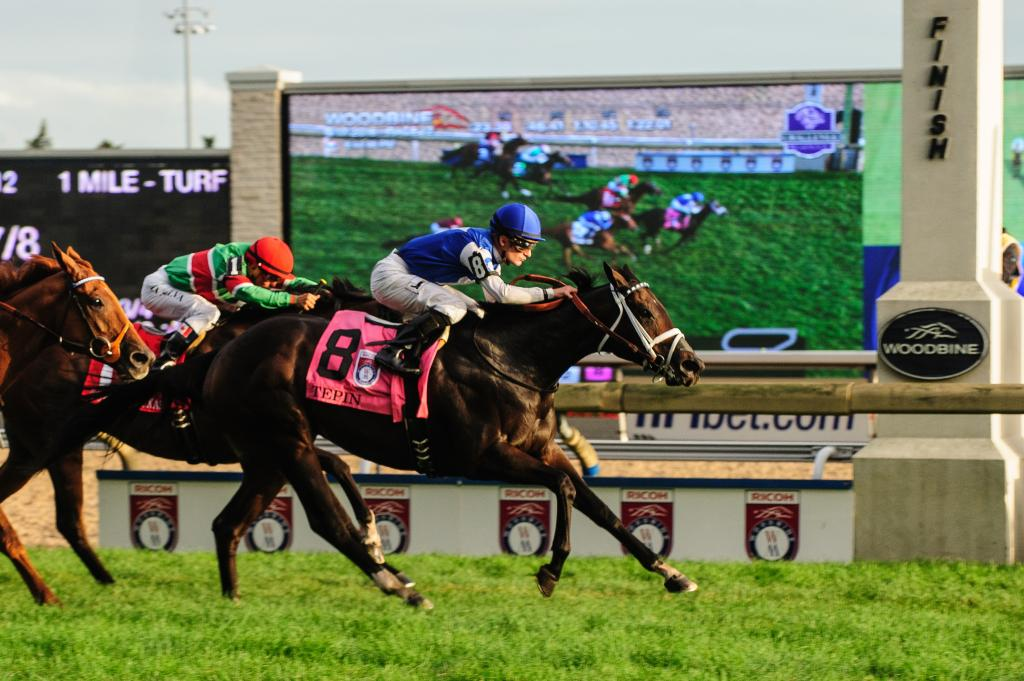 Tepin winning the Grade 1 Woodbine Mile Stakes one race after winning the Queen Anne Stakes at Royal Ascot. (Eclipse Sportswire)