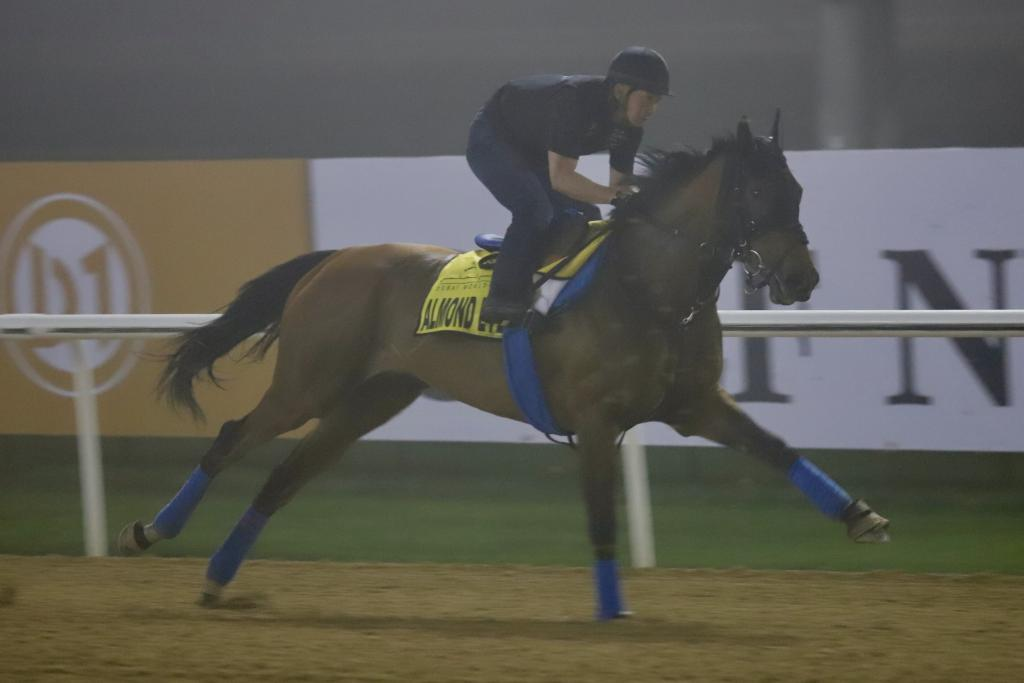 Almond Eye stretches her legs in her final gallop before the Dubai Turf. (Penelope P. Miller/America's Best Racing)