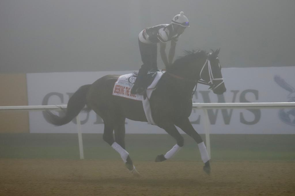 Seeking the Soul looked alert and professional galloping in preparation for the Dubai World Cup.  (Penelope P. Miller/America's Best Racing)