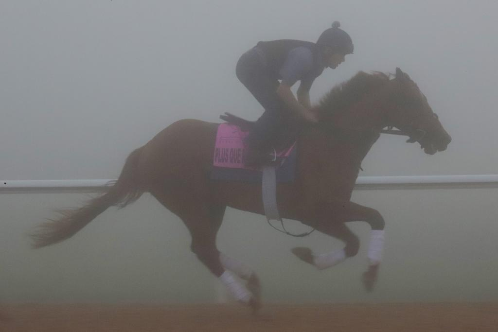 UAE Derby hopeful Plus Que Parfait galloping through the fog. (Penelope P. Miller/America's Best Racing)