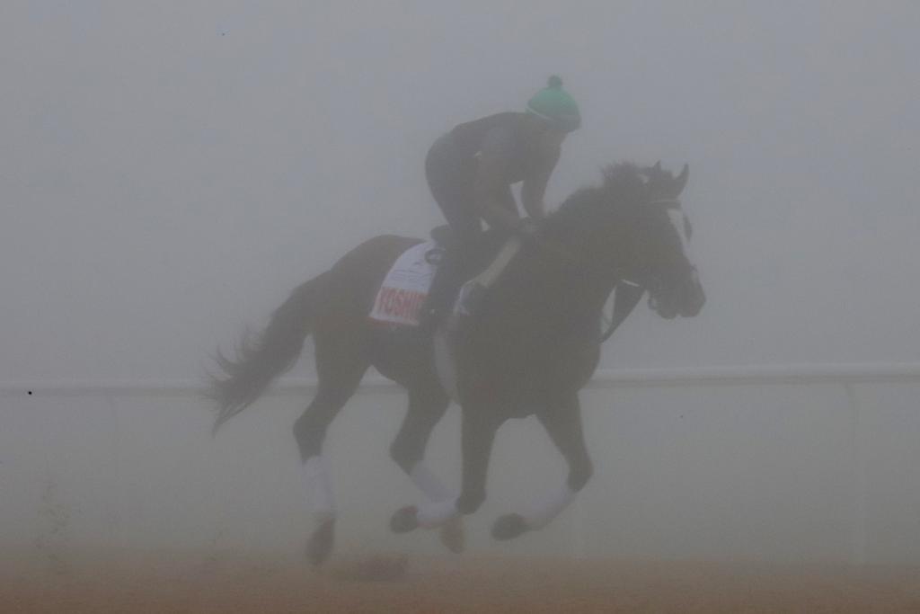 American Dubai World Cup hopeful Yoshida taking his final training lap around Meydan. (Penelope P. Miller/America's Best Racing)