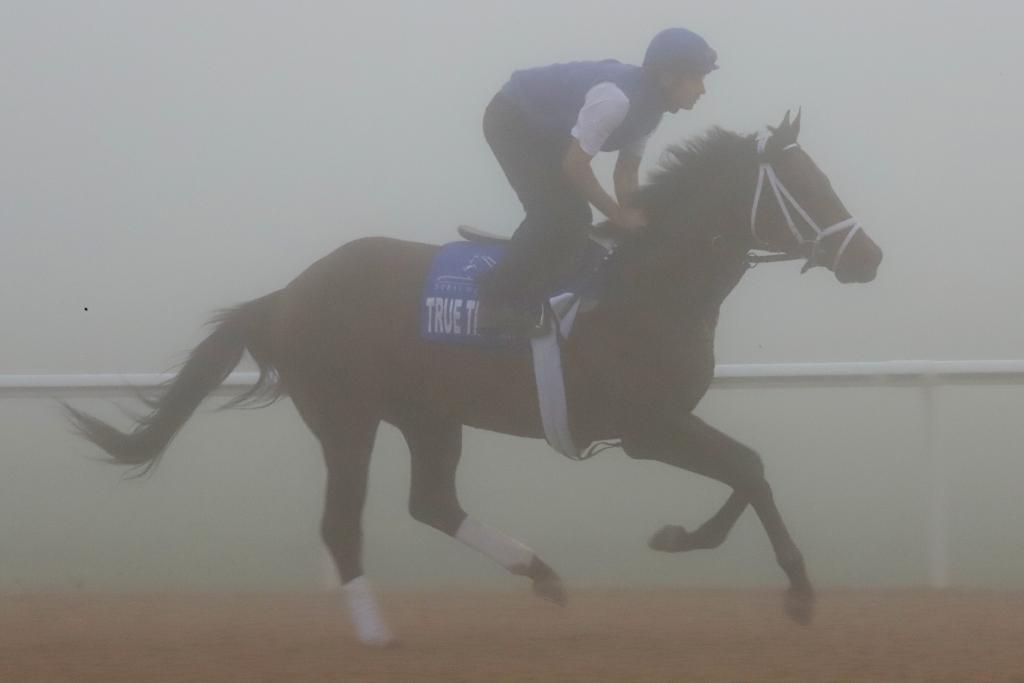 Godolphin Mile contender True Timber seemed to relish the unusual weather as he galloped around Meydan's dirt course. (Penelope P. Miller/America's Best Racing)