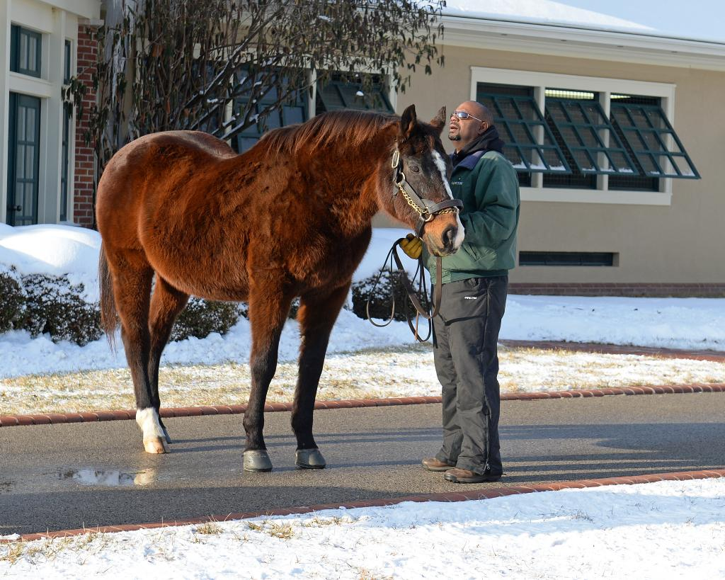 A.P. Indy at Lane's End. (Anne Eberhardt Keogh/BloodHorse)