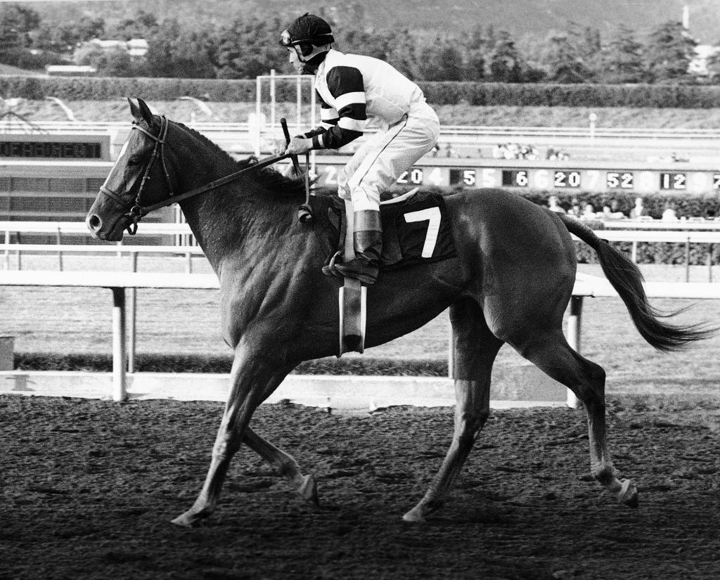 Laffit Pincay, Jr. jogs Affirmed to the winners circle after the odds-on favorite scored an eight-lenght victory in the Santa Anita Derby in 1978. (Santa Anita photo/Blood-Horse)