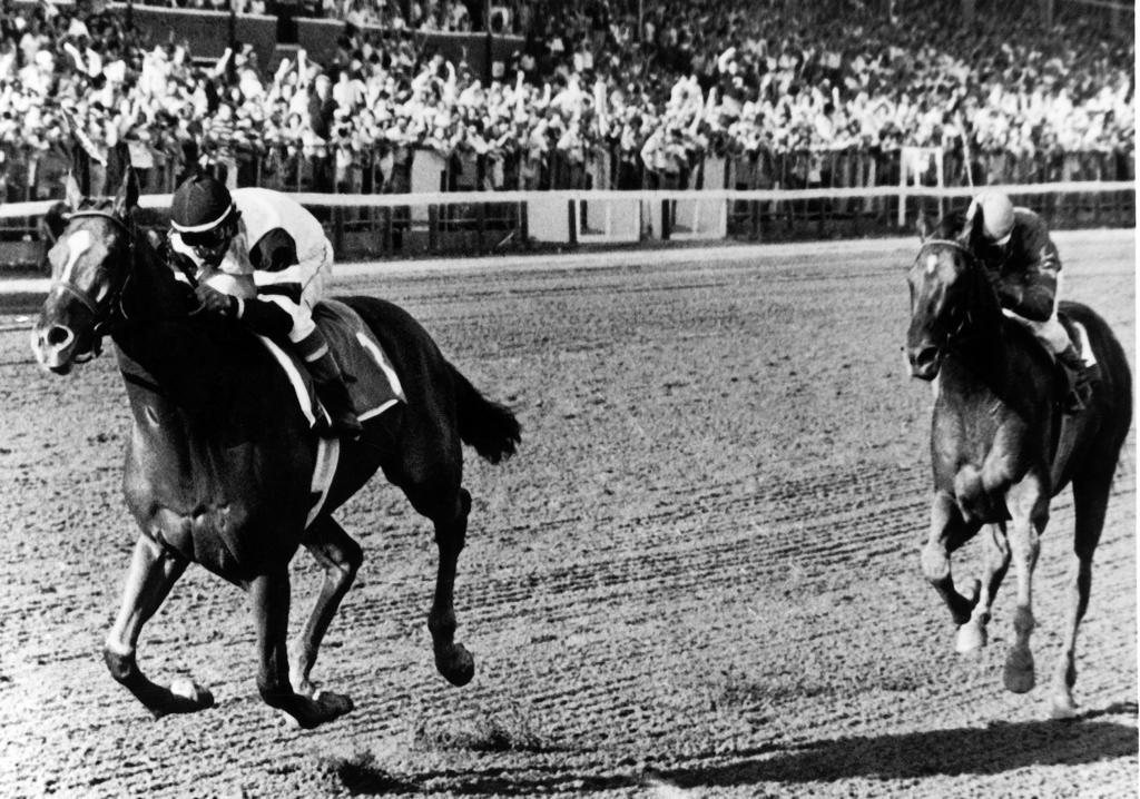 Affirmed crossing the finish line first in the Travers Stakes. He was later disqualified to second for impeding Alydar. (Bob Coglianese/Blood-Horse)